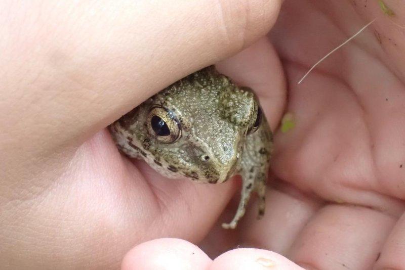 ガサガサ隊(2021/07/04)クロゲンの幼虫発見