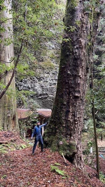 立派な巨木!